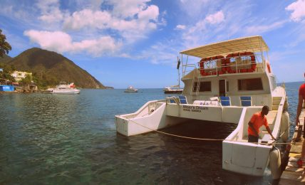 Whale Watching in Dominica